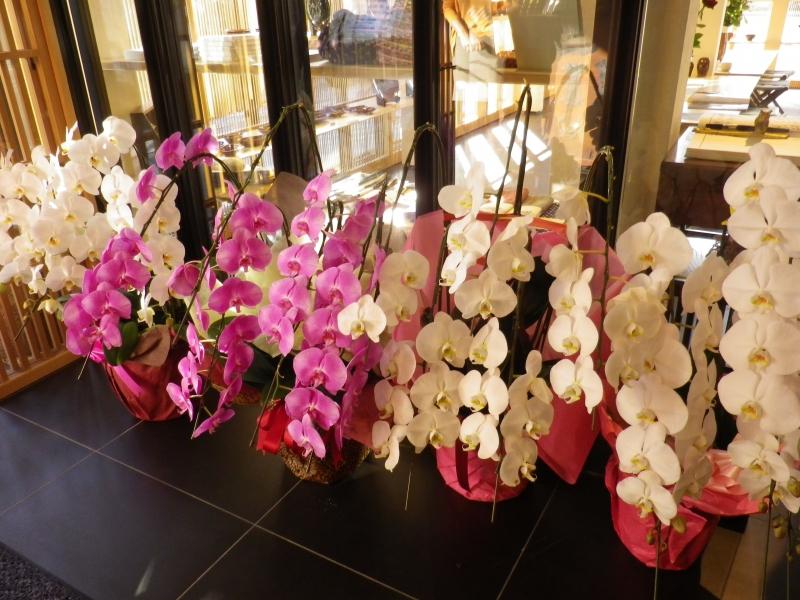 大樋先生の誕生祝い胡蝶蘭